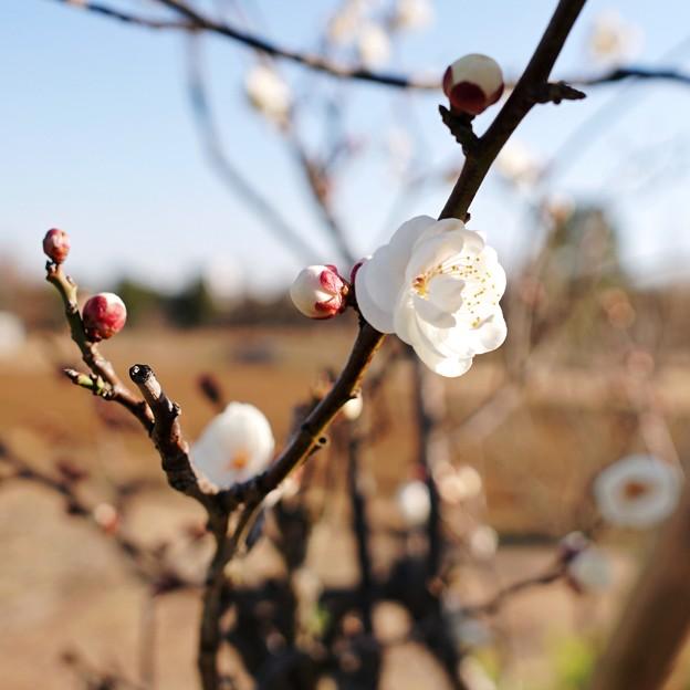 新しい春に(花菜ガーデン)_5552
