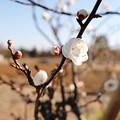 Photos: 新しい春に(花菜ガーデン)_5552