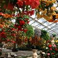 神戸植物園