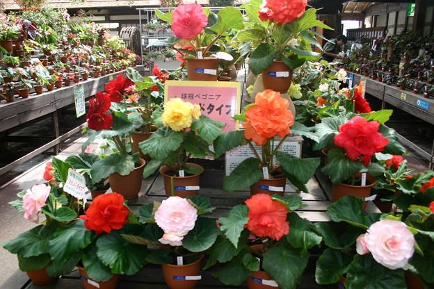 Photos: 神戸植物園