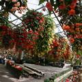 Photos: 植物園