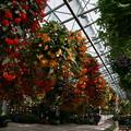 花のある観光地