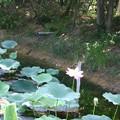 Photos: 観光植物園