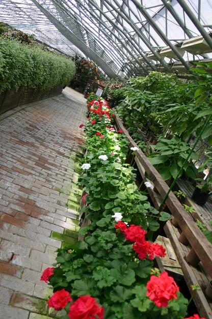 奇麗な花園