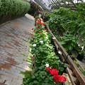 Photos: 奇麗な花園