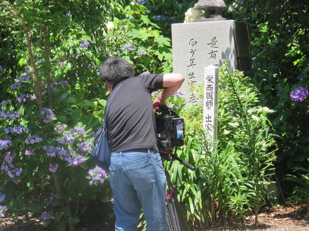 紫陽花寺の風景