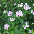 花のある公園