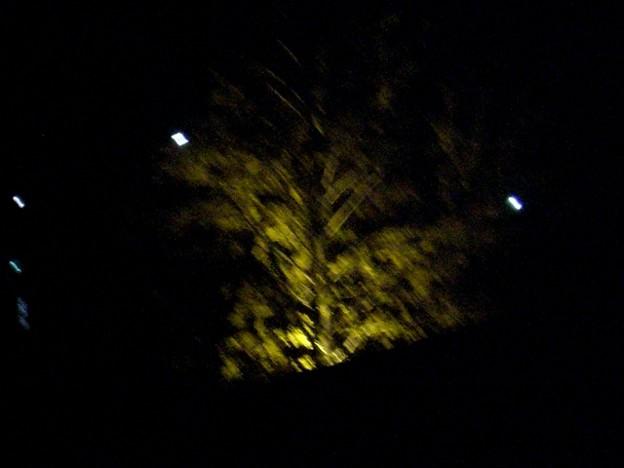 観光地の夜