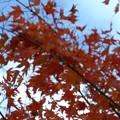 Photos: 紅葉のある風景