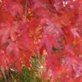 紅葉のある風景
