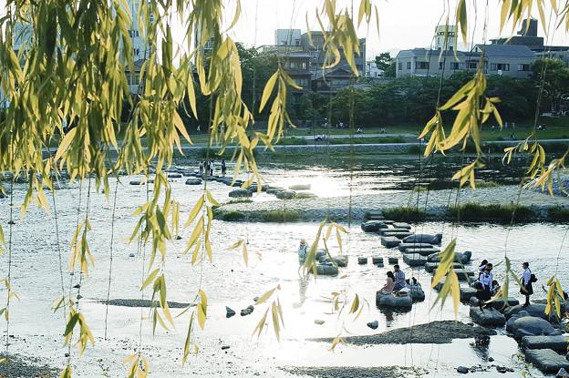 Photos: 初夏鴨川