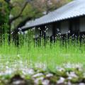 Photos: Green Grass