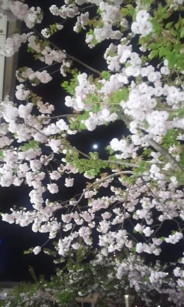 ただの八重桜と月