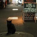Photos: 黒猫の瞳