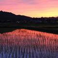 Photos: 夕焼けの田園