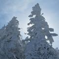 Photos: 小樹氷