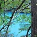 Photos: 林間の湖
