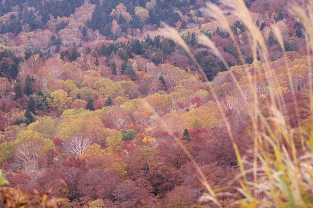 Photos: 紅葉の西吾妻