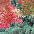 Photos: 赤黄緑のもみじ