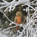 Photos: 氷花の中の野鳥