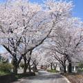Photos: 日本国 山梨県 笛吹市 八代町 ふれあいスポーツ館付近の桜
