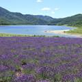 写真: 2460 無人のラベンダー畑@北海道