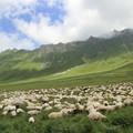 Photos: 2610 軍用道路を阻む羊の群れ@ジョージア