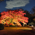 Photos: Autumn leaves in City