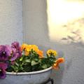 Photos: 春よこい ~♪ 早くこい~♪
