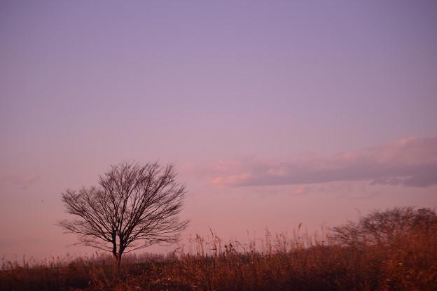 ゆうやけこやけの 木