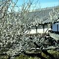 Photos: 春は里から