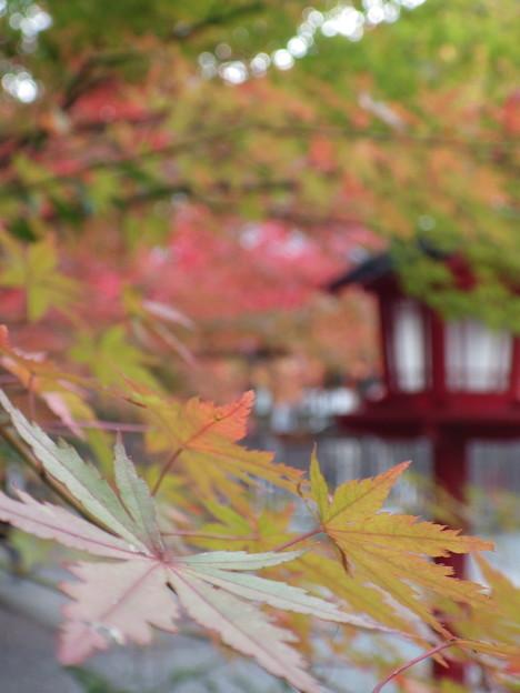 亀岡 鍬山神社にて