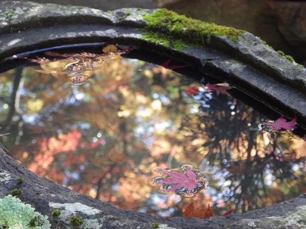 水鏡の中の晩秋