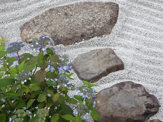 甘茶と枯山水~霊源院