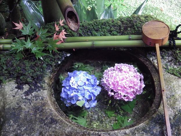 雨あがりの花手水