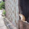 Photos: 犬島の猫