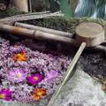 秋桜の花手水