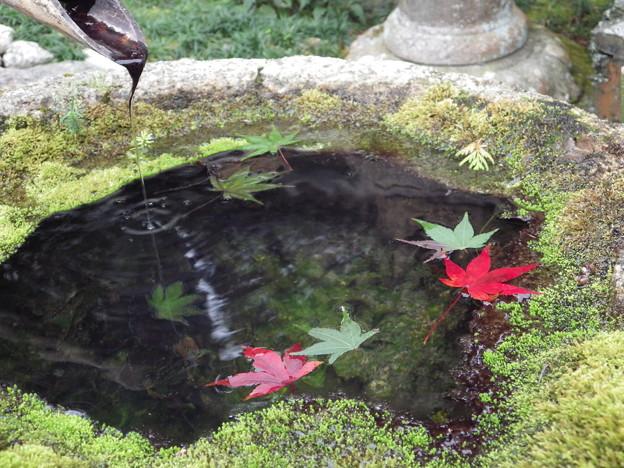 秋を浮かべて