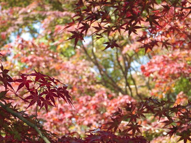 鍬山神社の紅葉