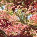 Photos: 鍬山神社の紅葉