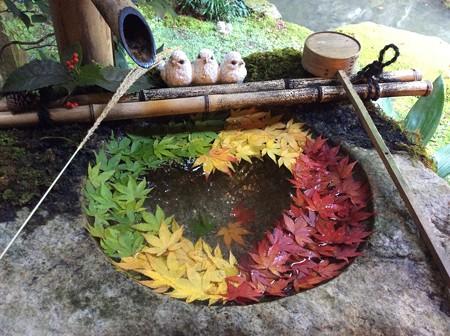 秋  真っ盛り