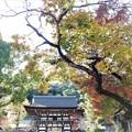 Photos: 松尾大社の紅葉