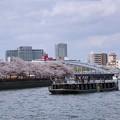 大川端の桜並木
