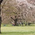 写真: 春二番
