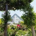 写真: バラと温室