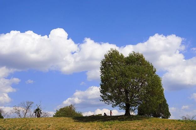 写真: 丘の上