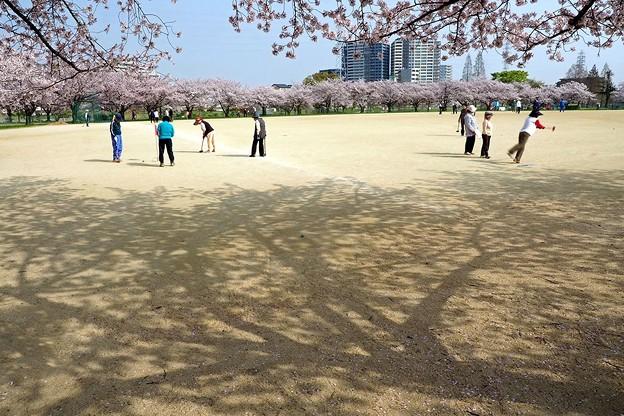 桜の下でゲートボール