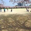 写真: 桜の下でゲートボール