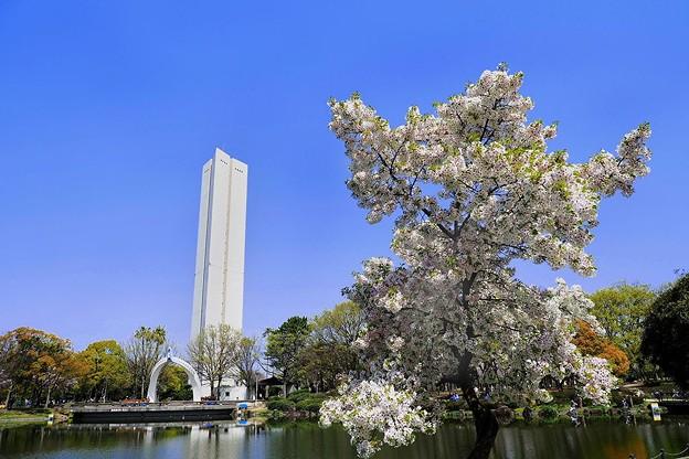 怪獣桜^^;