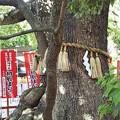 Photos: 楠珺社(住吉大社)